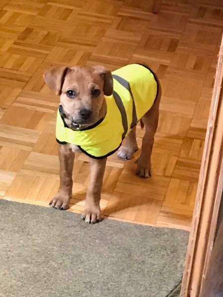 peggy in gilet jaune